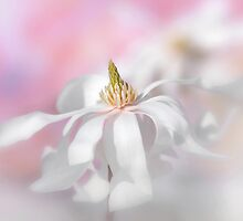 Magnolia dance by Lyn Evans