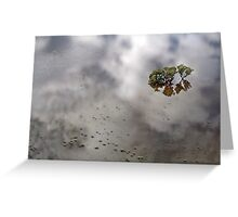 Flooded Plains!  Greeting Card