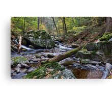 The Babbling Brook Canvas Print