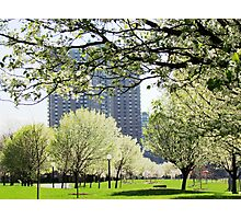 Urban Oasis, New York City Photographic Print