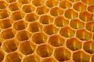 Honeycomb by Michelle Cocking