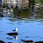 Bird Watching by Fara