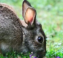 Spring Bunny by Ticker