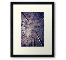 English Forest Trees  Framed Print
