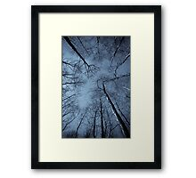 Epping Forest trees, Essex, England Framed Print