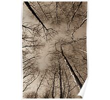 Epping Forest trees, Essex, England Poster