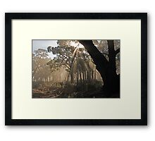 Fog in the Forest Framed Print