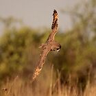 Lets Go HUnting by Graeme M