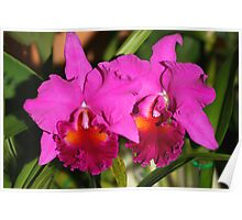 Bright Pink Orchids Poster