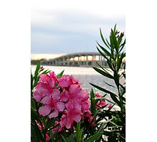 Azaleas & Halifax River Bridge Photographic Print
