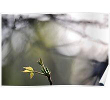 Blooming For Spring Poster