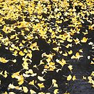 Gingko Leaves after Rainfall by argenticvision