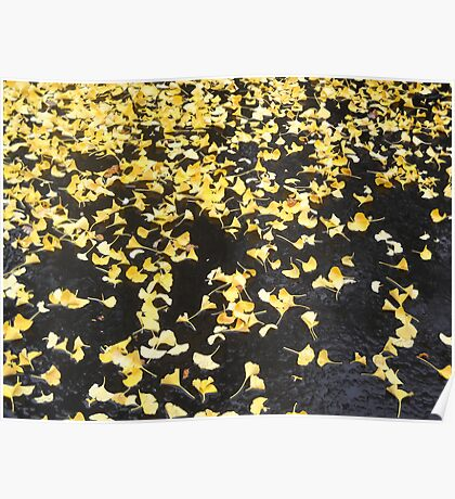 Gingko Leaves after Rainfall Poster