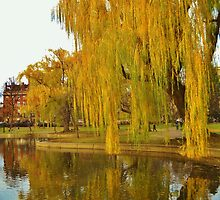 Lakeside Willow by argenticvision