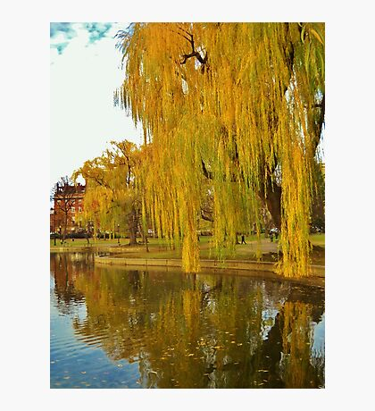 Lakeside Willow Photographic Print