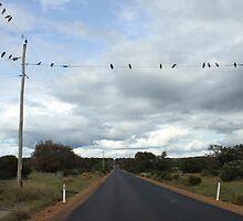 Birds on a wire by taryn88