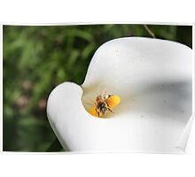 Death lilly and bee Poster