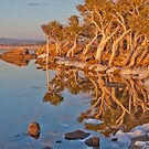 Morning Reflections by Robin Young