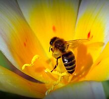 Bee collecting pollen - Van Dusen Botantical Garden by Kathryn  Young