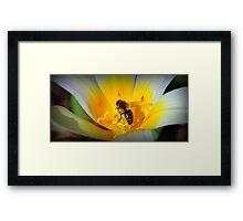 Bee collecting pollen - Van Dusen Botantical Garden Framed Print