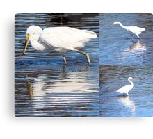 Collage of White Egrets in the Lake Metal Print