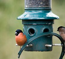 Finches At The Feeder... by Jamie  Green