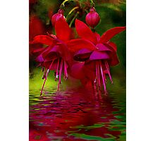 """Living Bells"" Photographic Print"