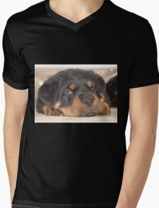 Adorable Rottweiler Puppy With Blue Eyes Mens V-Neck T-Shirt