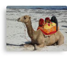 resting camel Canvas Print