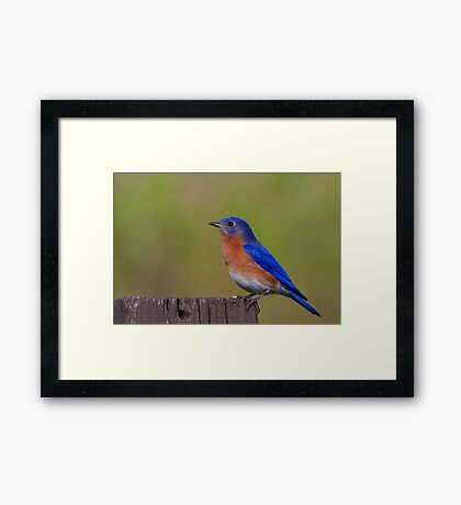 Perched For Success Framed Print