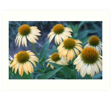 Pretty Coneflowers Art Print