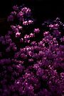 Rhododendron Popcorn by Adam Bykowski