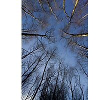 Epping Forest trees, Essex, England Photographic Print