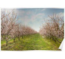 Niagara's Blossom Garden Poster