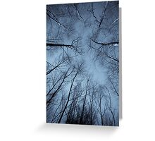 Epping Forest trees, Essex, England Greeting Card