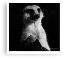 Meerkat in the shadow b/w Canvas Print