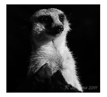 Meerkat in the shadow b/w Photographic Print