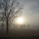 Morning Fog by Leanna Lomanski
