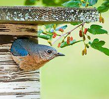 In Mrs. Bluebird's Garden by Bonnie T.  Barry