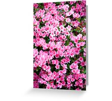 Pink Azaleas - greeting card - no text Greeting Card