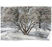 winter dogwood Poster