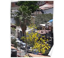 Palm and Spring Tree - Palma y Arbol de Primavera Poster