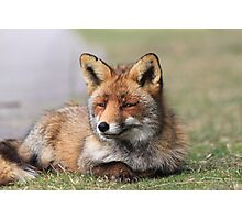 Red fox 3405 Photographic Print