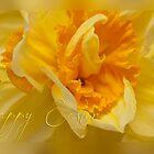 Easter card - daffodil by Magdalena Warmuz-Dent