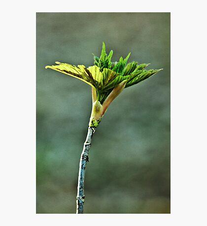 Spring leaf Photographic Print
