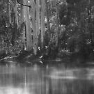 Black and White Lake  by MIchelle Thompson