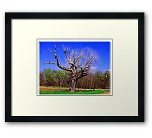 Crazy Cool Tree Framed Print