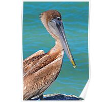 Pelican on the coast Poster