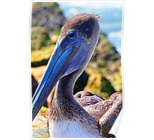 Pelican on the Jetty Poster