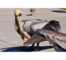 Fight over Free Lunch Photographic Print
